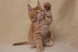 Кот должен быть в каждом доме))))